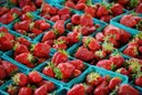 warm strawberries, picked just before market