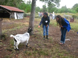 Goats at My Sister's Farm, photo courtesy of Kavanah Ramsier