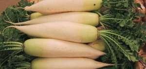 Daikon- a mild-flavored, large, white East Asian radish